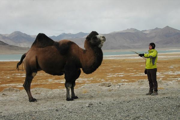 Bactrian Camel - Murghab, Tajikistan