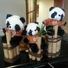 Sheraton's cute stuffed pandas