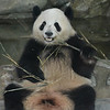 Bamboo is obviously delicious