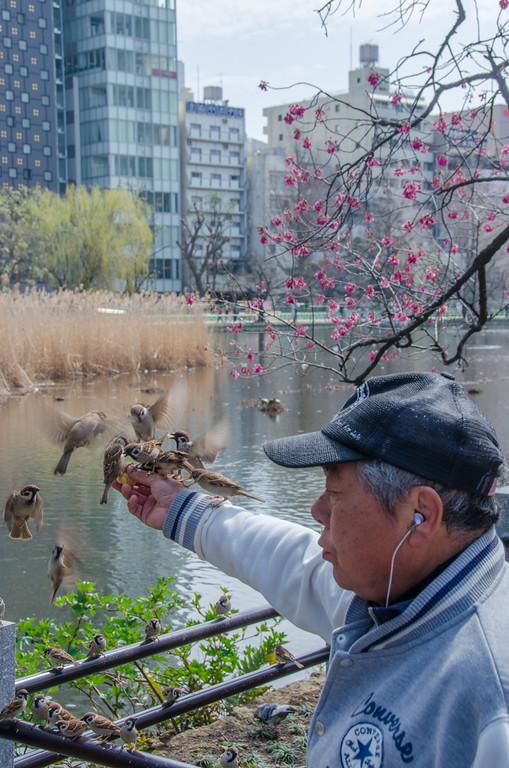 The bird man in Tokyo's Ueno Park