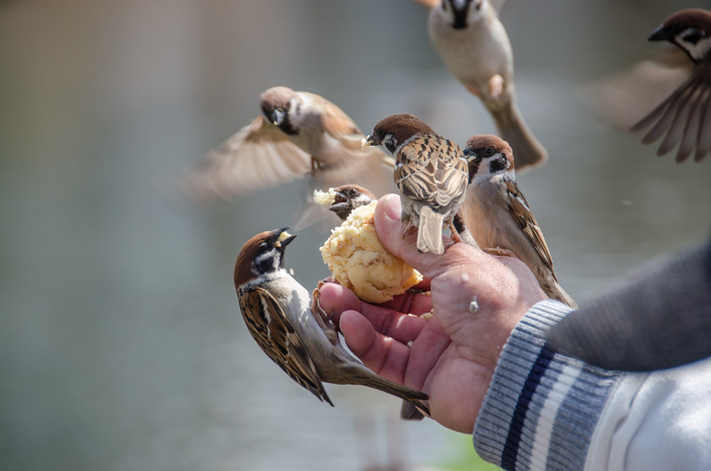 Feeding the birds in Tokyo's Ueno Park