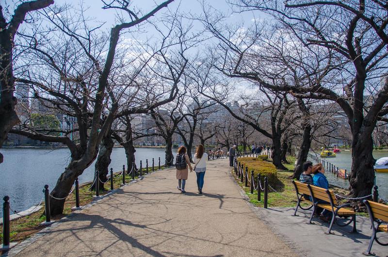 Cherry (sakura) trees in Ueno Park, Tokyo