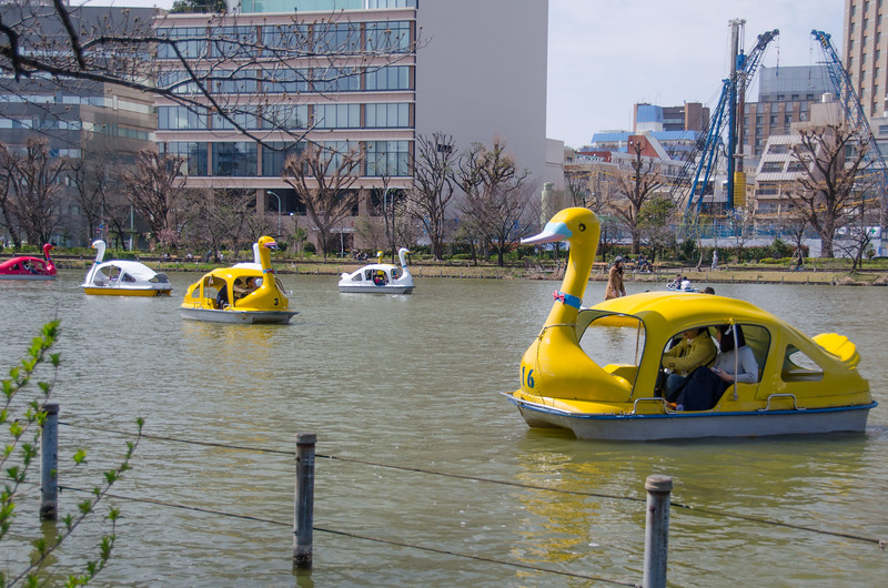 Duck shaped paddle boats in Tokyo's Ueno Park