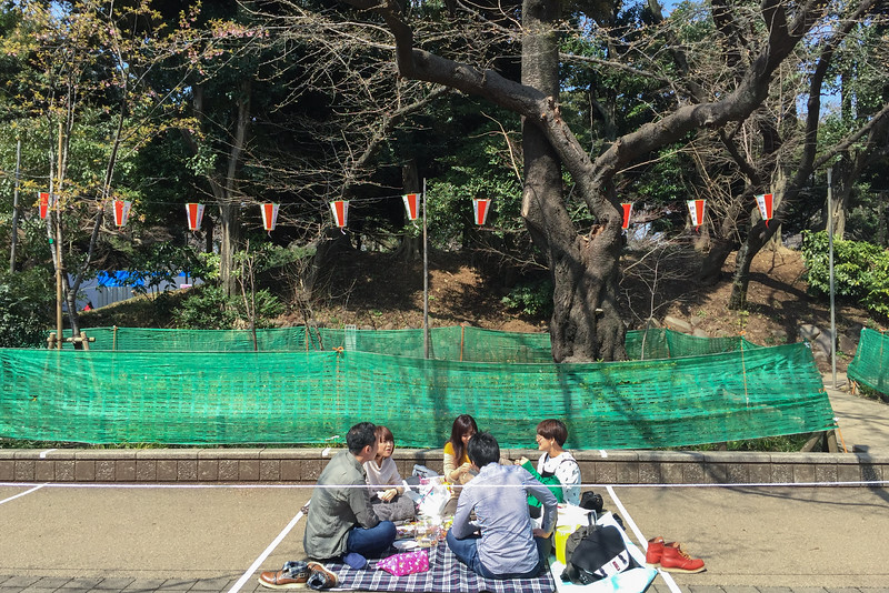 Cherry blossom viewing picnic in Tokyo's Ueno Park