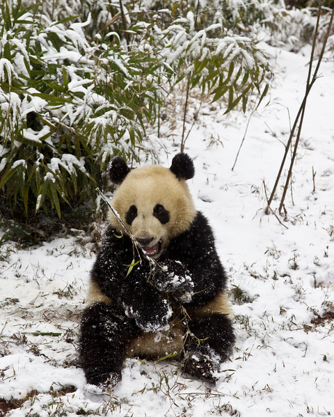 Bamboo is what it's all about, but it's cold out here!!
