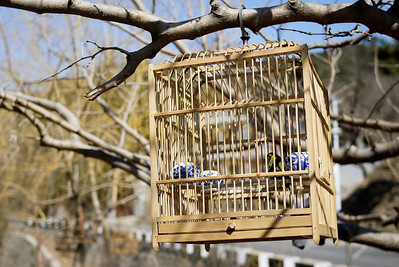A bird sunning itself outside in a cage - the locals give their birds outside time in this manner! Beijing, China.