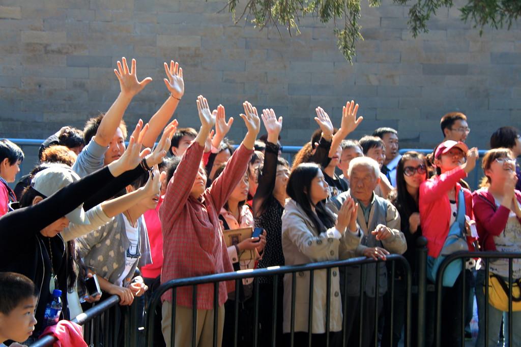 Fans of the Nine-Dragon Cypress Tree - Beijing, China - Photo