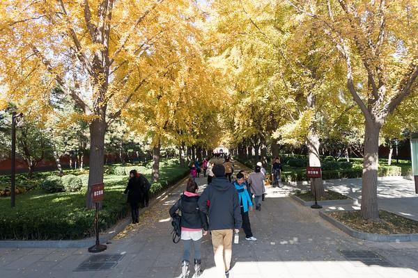 Beijing - Nov 2014