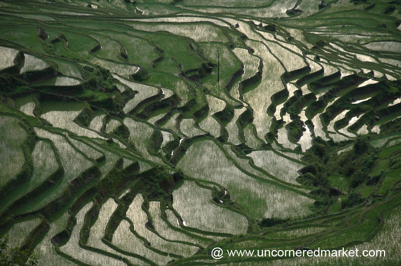 Beautiful Rice Terraces - Yuanyang, China