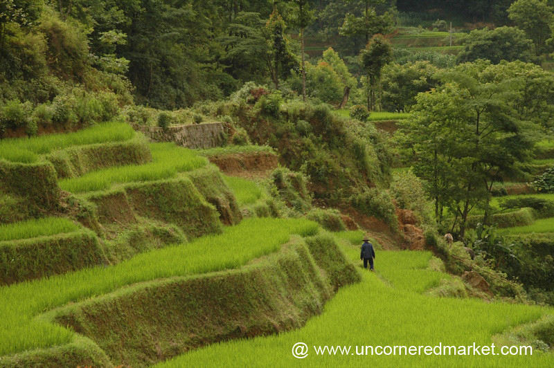 Man Working in Rice Fields - Yuanyang, China