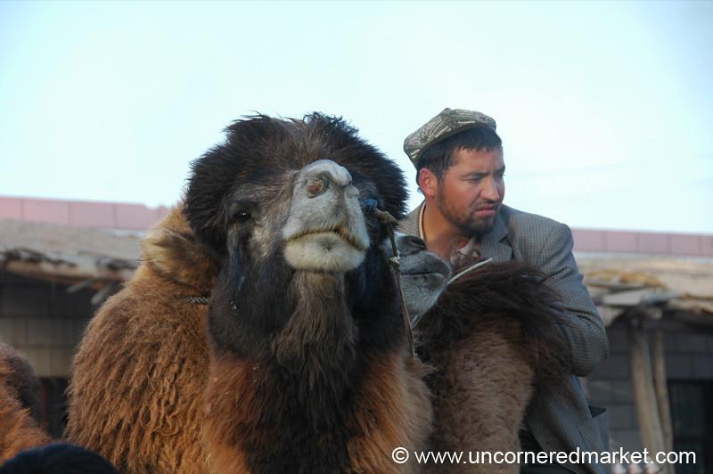 Camel at Kashgar Animal Market - China