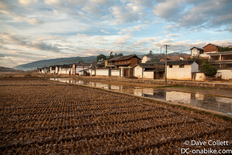 Houses and rice paddies