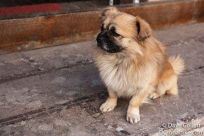 Dogs of Yunnan
