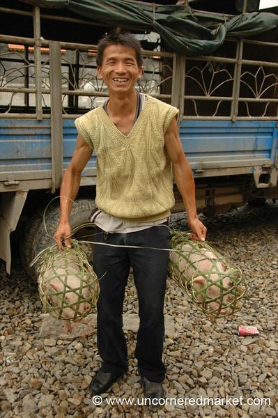 Chinese Man Lifting Pigs - Guizhou Province, China