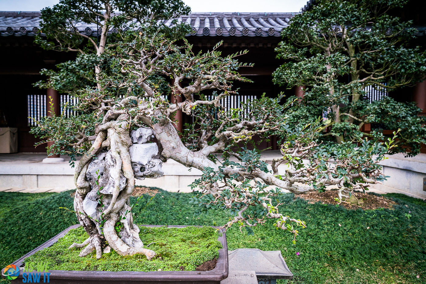 Incredible display of Bonsai trees