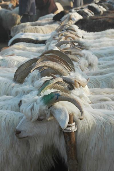 Kashgar Animal Market: Goats - China