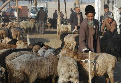 Sheep for Sale - Kashgar, China