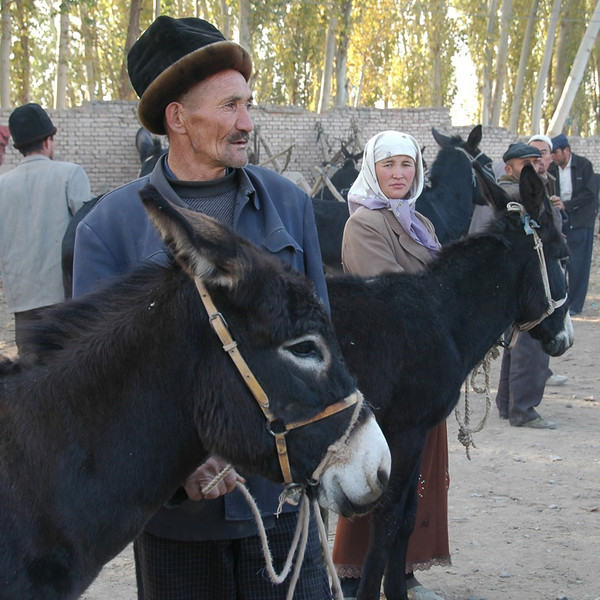 Kashgar Animal Market: Selling Donkeys - China