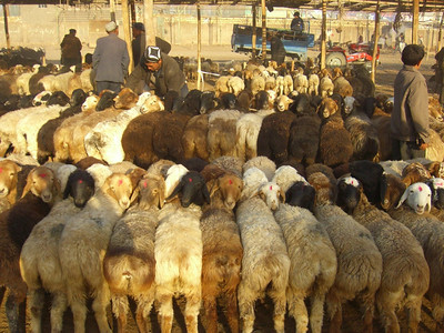 Sheep at Kashgar Animal Market - Kashgar, China