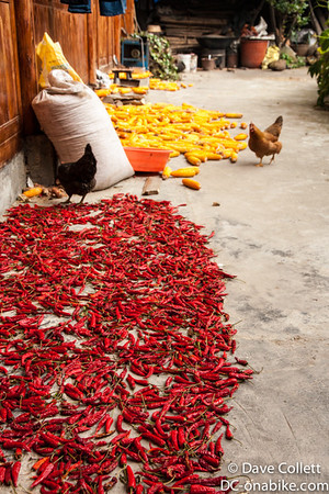 Chillies, corn and chickens, sounds like a good meal to me!