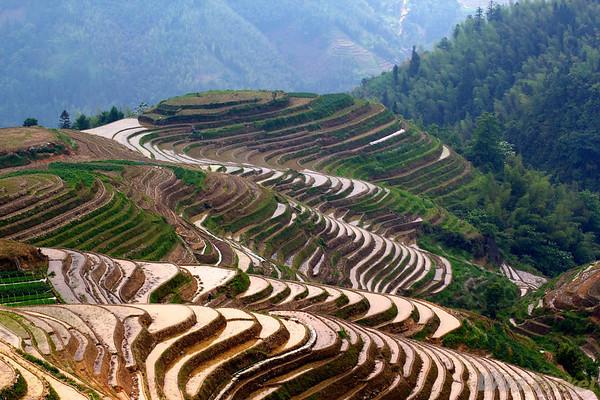 Longsheng rice terraces, China