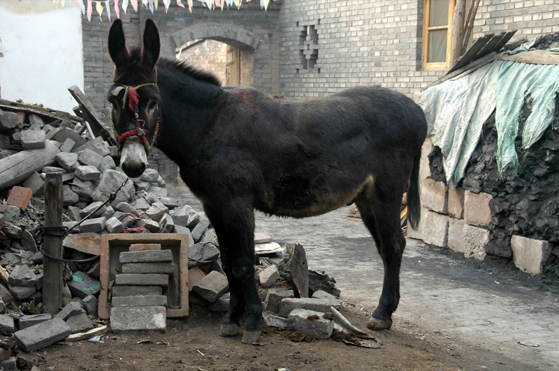 Big Donkey - Pingyao, China