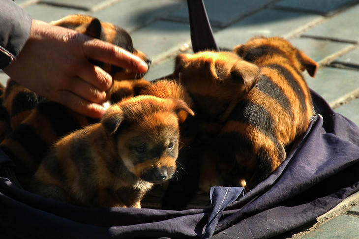 Striped Dogs - Urumqi, China
