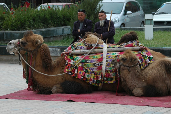 Camel Owners - Kashgar, China