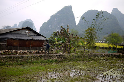 Workers haul rocks and gravel to their building site deep in the rice paddies, rural countryside around Yangshuo, China.
