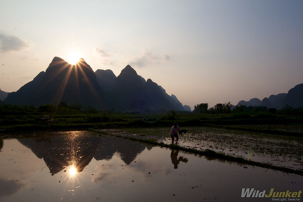 Growing rice in the outskirts of Yangshuo