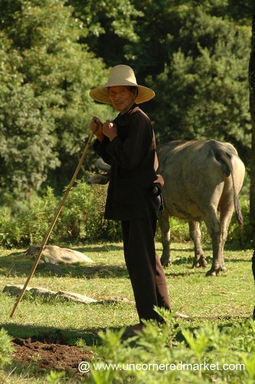 Man and his Water Buffalo - Yuanyang, China