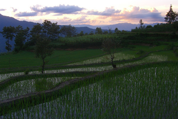 Yuanyang Sunset at Rice Fields - Yunnan, China