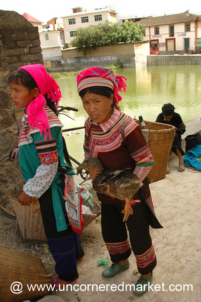 Hani Woman with a Duck - Yuanyang, China