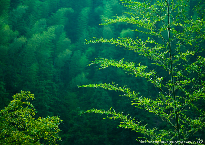 Bamboo Forest - Ping An