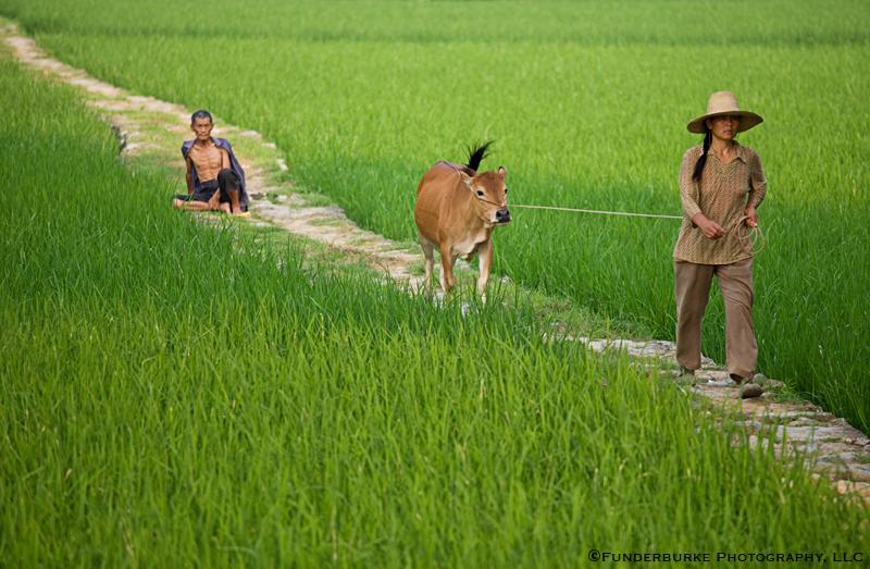 Rice Fields Path - Yangshuo