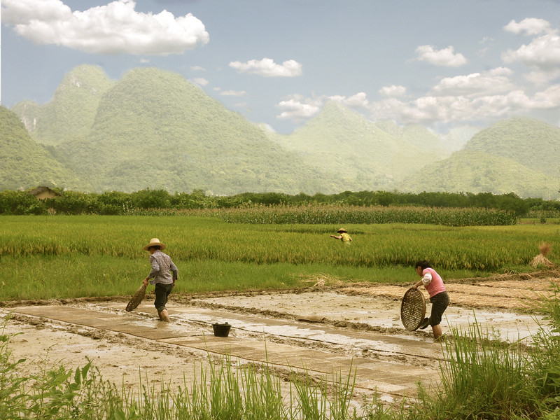 Farmers tending to the rice fields in Guanxi province.  The region is known for the limestone peaks seen in the distance.