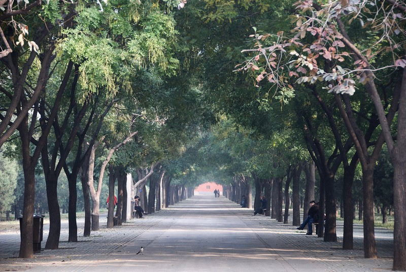 Serenity within a busy Beijing City