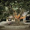 Guiling Banyan Wishing Tree