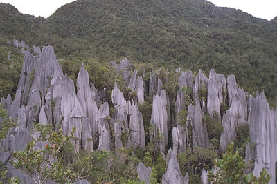 The Pinnacles, Mulu NP