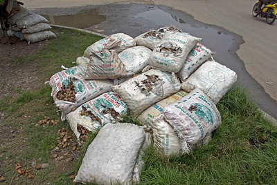 Food aid bags piled atop each other on a street of Dili, East Timor