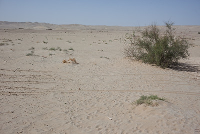 Hotan, Xinjiang, China - September 29, 2009:Taklamakan desert near Hotan.  (Photo by: Christopher Herwig)