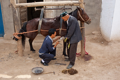 Kucha, China - September 23, 2009: Horse getting his shoes replaced. (Photo by: Christopher Herwig)