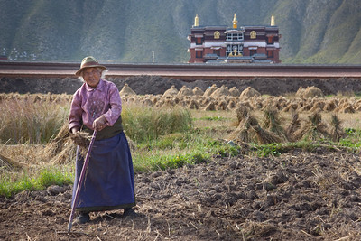 Senior woman working in the fields in Xiahe, Gansu, China.