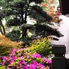 Chrámová zahrada