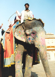 Elephant in Jaipur