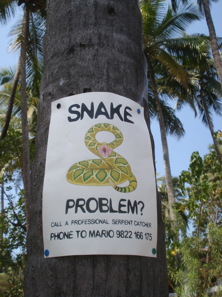 Snake problem, Anjuna - India