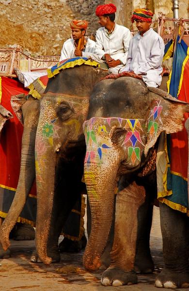 amber fort elephants jaipur