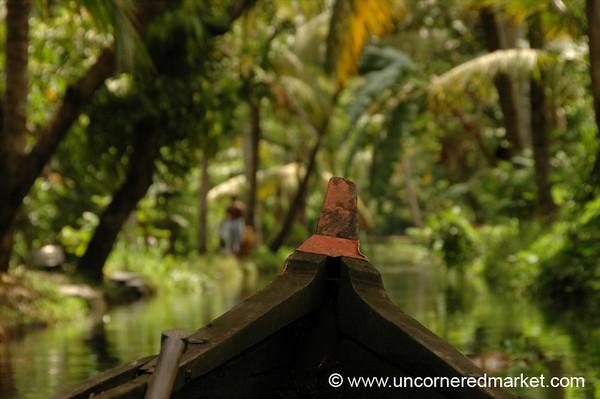 Backwater Jungle Tack: Kerala, India