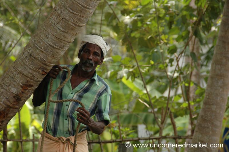 Peeking Out - Kerala Backwaters, India