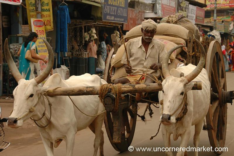 You Looking at My Ox Cart? - Kollam, India